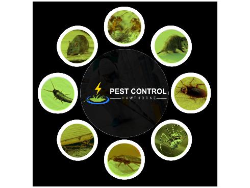 Pest Control Grange